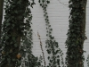 Plants-Various_Photo_Texture_B_5606