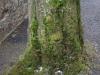 Plants-Various_Photo_Texture_B_P2080617