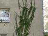 Plants-Various_Photo_Texture_B_P4110663