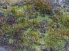 Plants-Various_Photo_Texture_B_P4131058