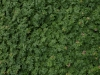 Plants-Various_Photo_Texture_B_P4131161