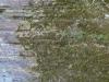 Plants-Various_Photo_Texture_B_P4241777