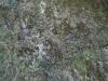 Plants-Various_Photo_Texture_B_P4241779