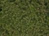 Plants-Various_Photo_Texture_B_P4261813
