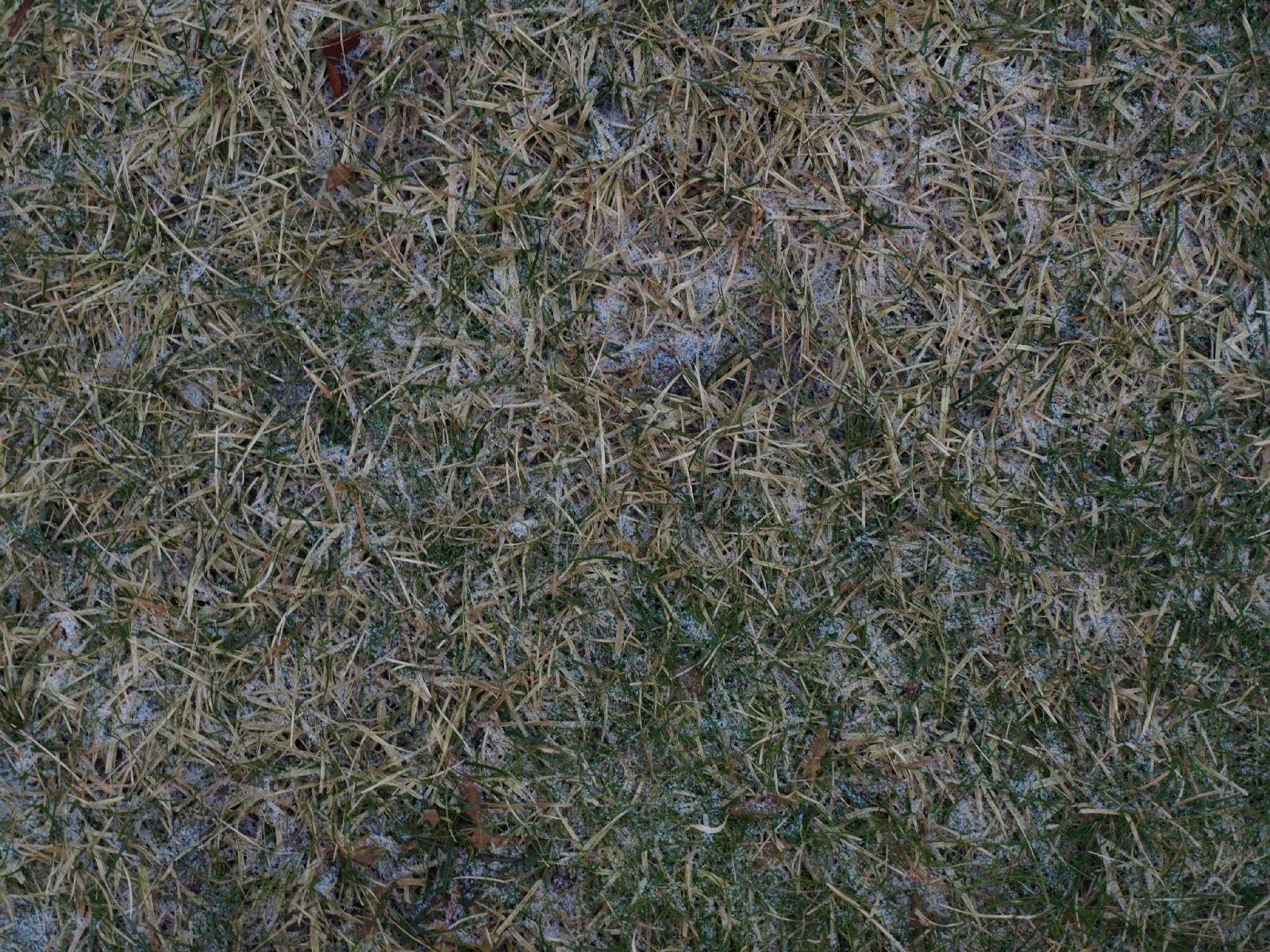 Snow_Texture_A_P1018658