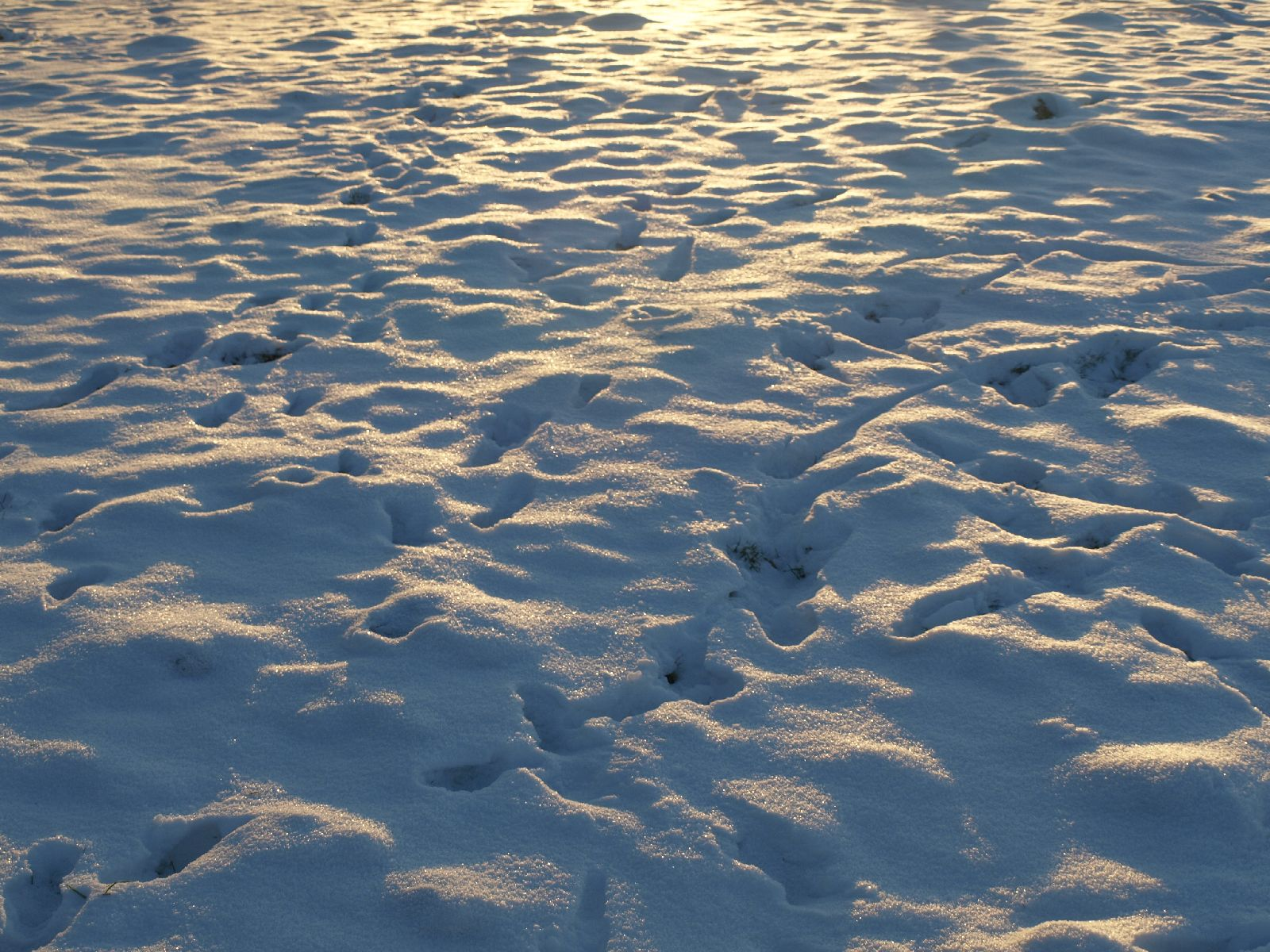 Snow_Texture_A_P1109045