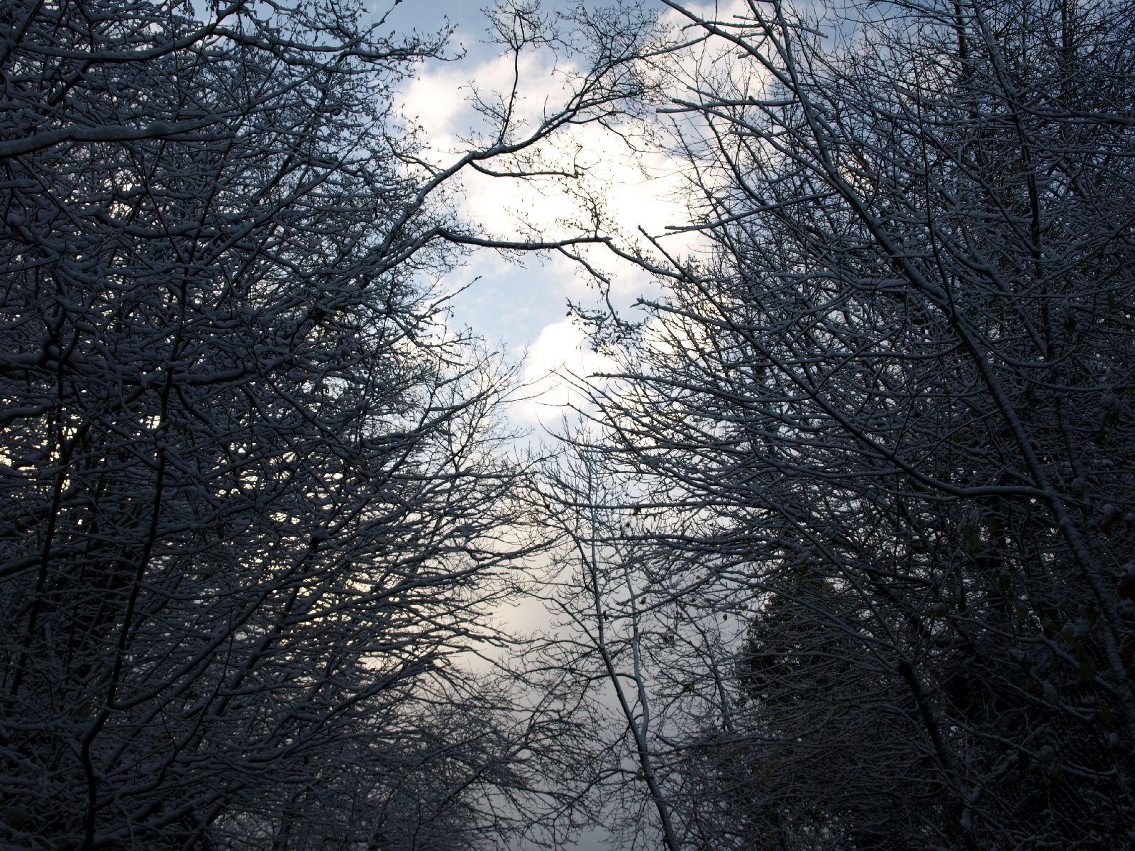 Snow_Texture_A_PB226719