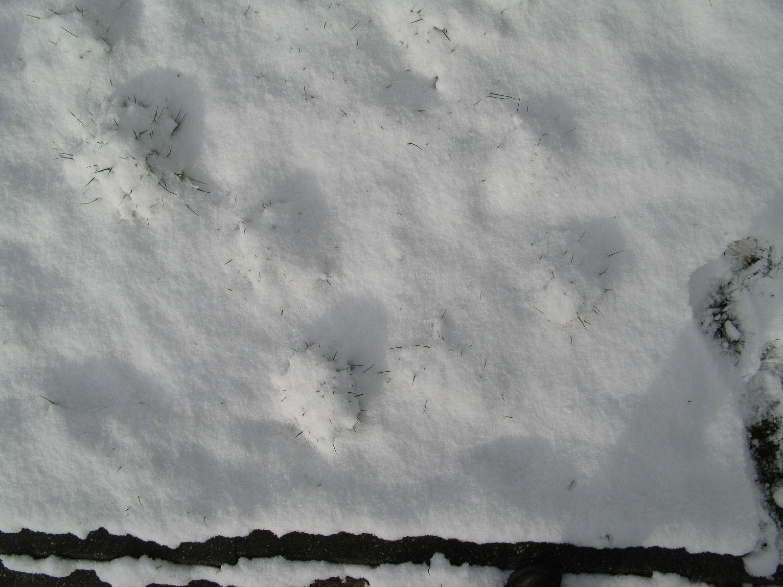 Snow_Texture_B_5840
