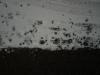 Snow_Texture_A_P1028724
