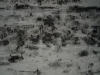 Snow_Texture_A_P1028730