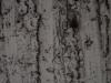 Snow_Texture_A_P1028752