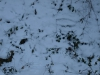 Snow_Texture_A_P1119206