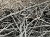 Snow_Texture_A_PB226708