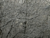 Snow_Texture_A_PB226721