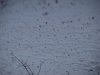 Snow_Texture_A_PC211533