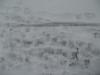 Snow_Texture_B_5895