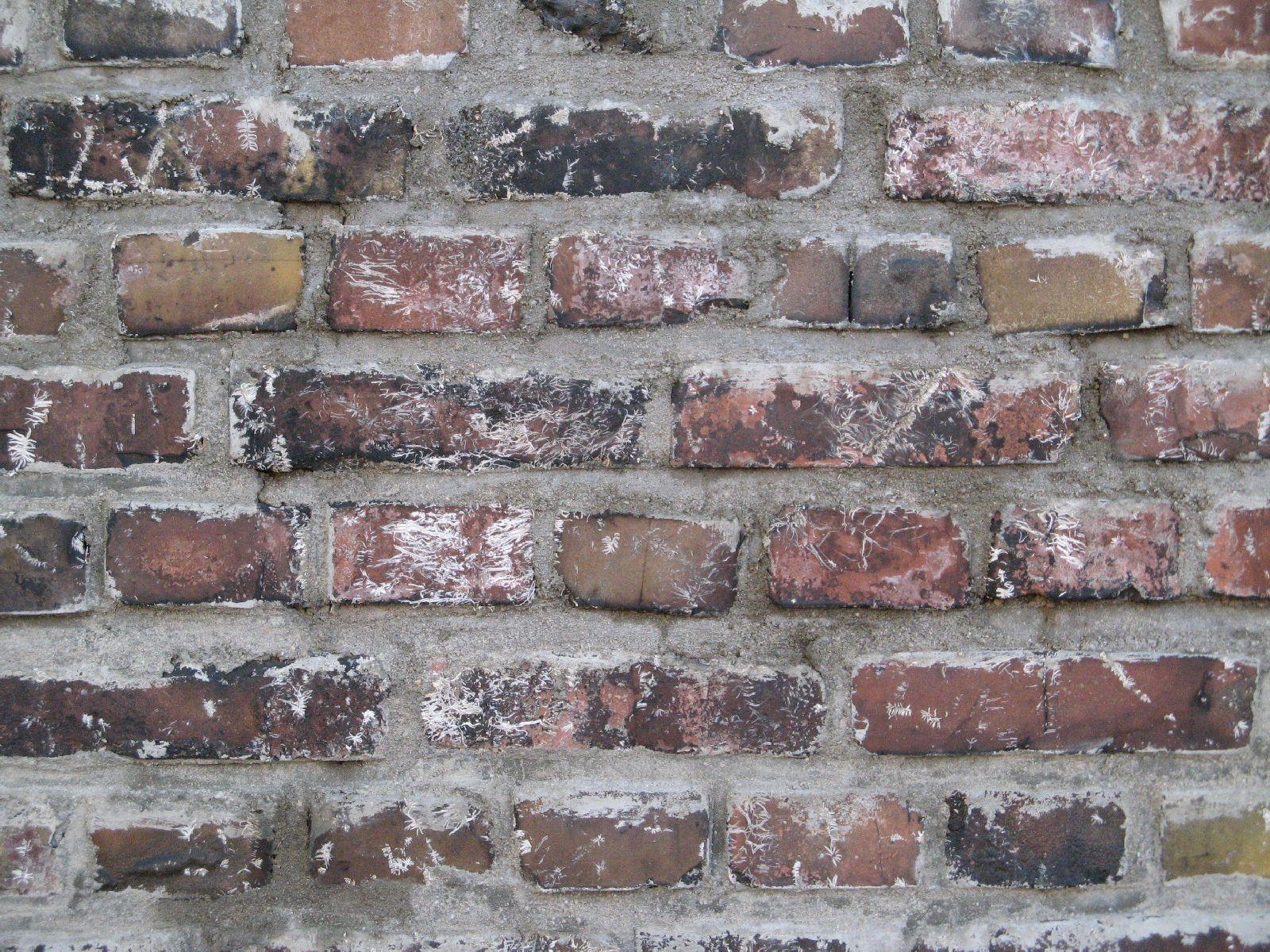 Brick_Texture_B_00747