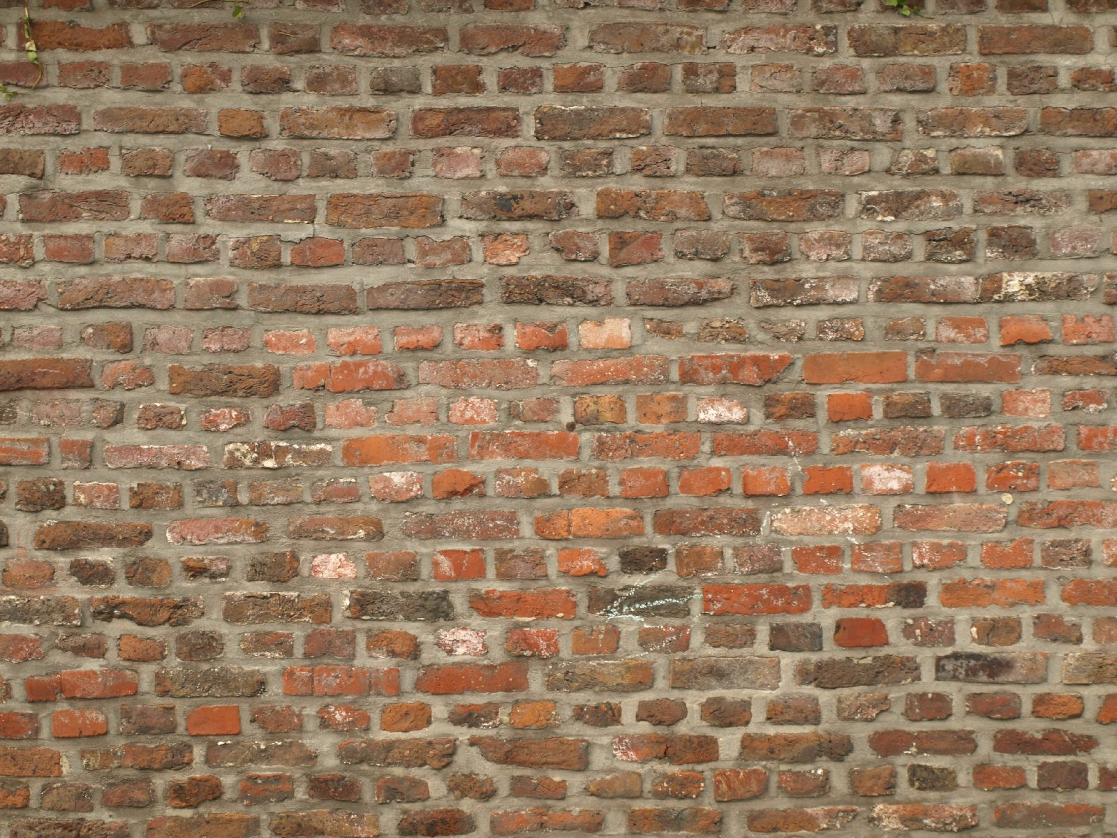 Wall: Free Old And Aged Walls Texture Photo Gallery