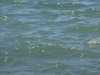 Water_Texture_A_P5234482