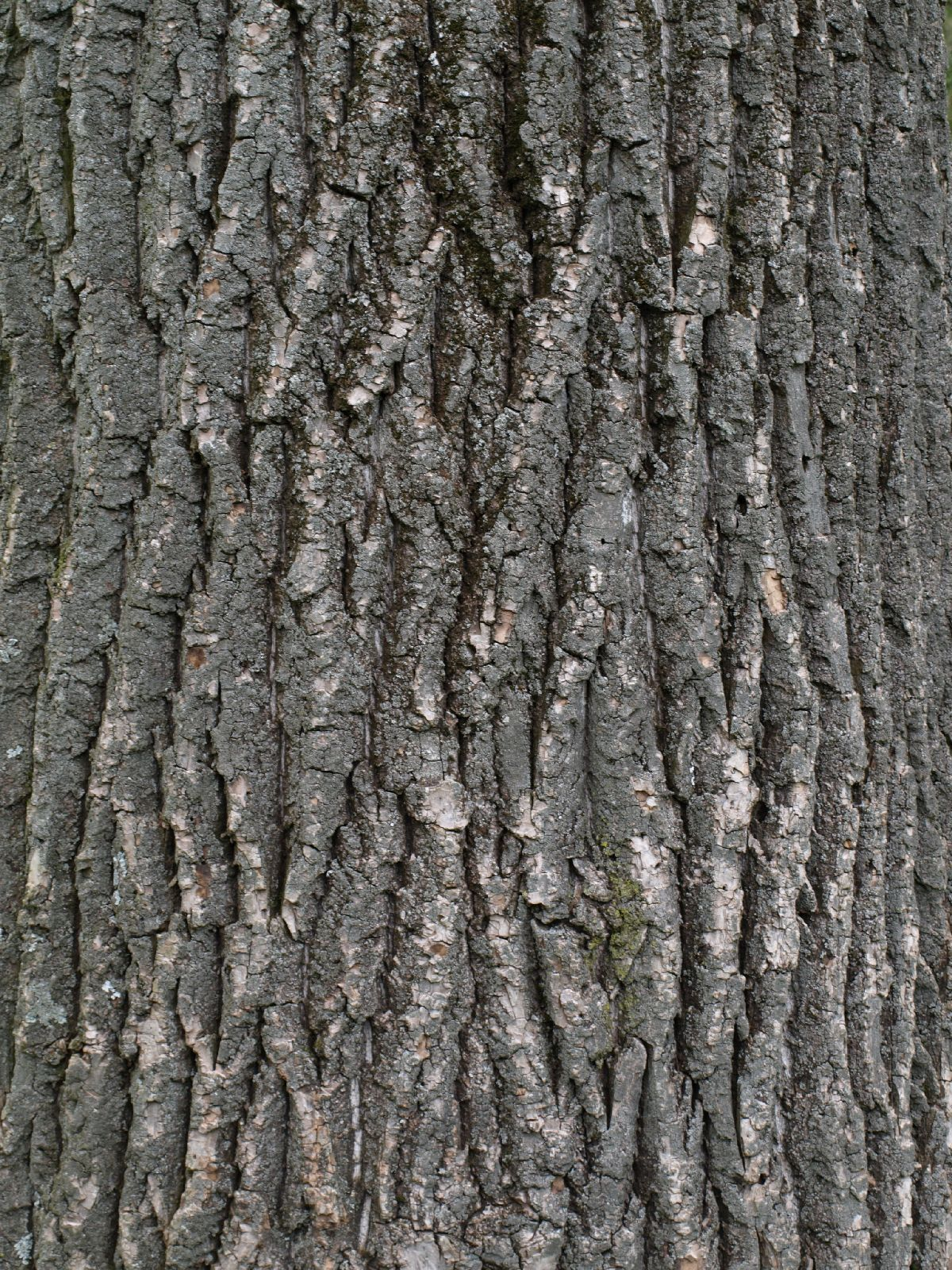 Free Tree Bark Texture Gallery