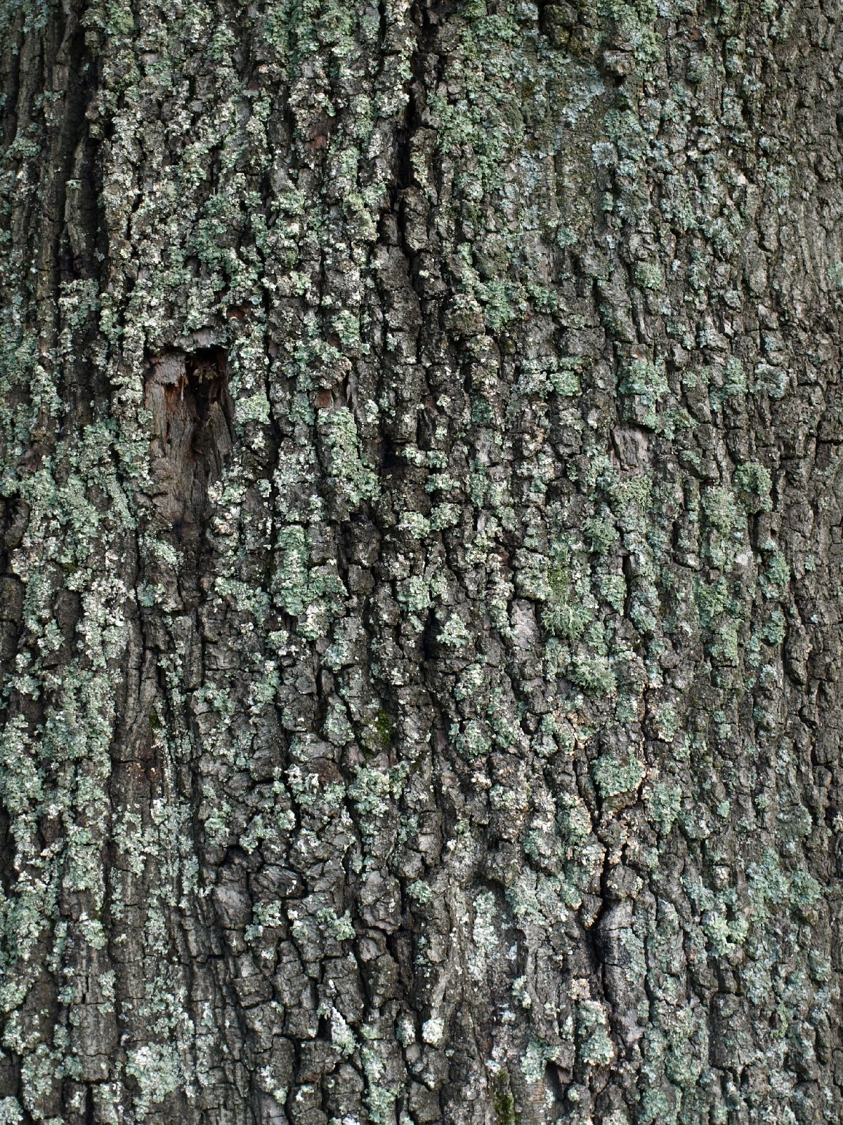 Privacy Policy >> Free Tree Bark Texture Photo Gallery