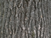Wood_Texture_A_P4120847
