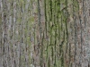 Wood_Texture_A_P4120932