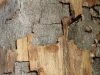 Wood_Texture_A_PA180273