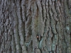 Wood_Texture_A_PA256334