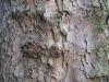 Wood_Textures_B_08920