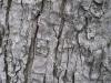 Wood_Textures_B_09210