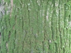 Wood_Textures_B_23810