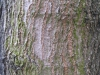 Wood_Textures_B_23840