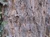 Wood_Textures_B_24700