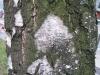 Wood_Textures_B_25660