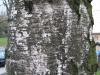 Wood_Textures_B_25680