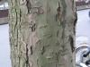 Wood_Textures_B_26320