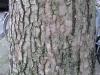 Wood_Textures_B_26340