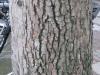 Wood_Textures_B_26350