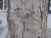 Wood_Textures_B_26360