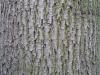 Wood_Textures_B_26770