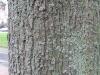 Wood_Textures_B_26800