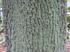 Wood_Textures_B_26820