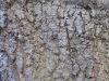 Wood_Textures_B_27230