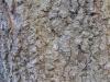 Wood_Textures_B_27240