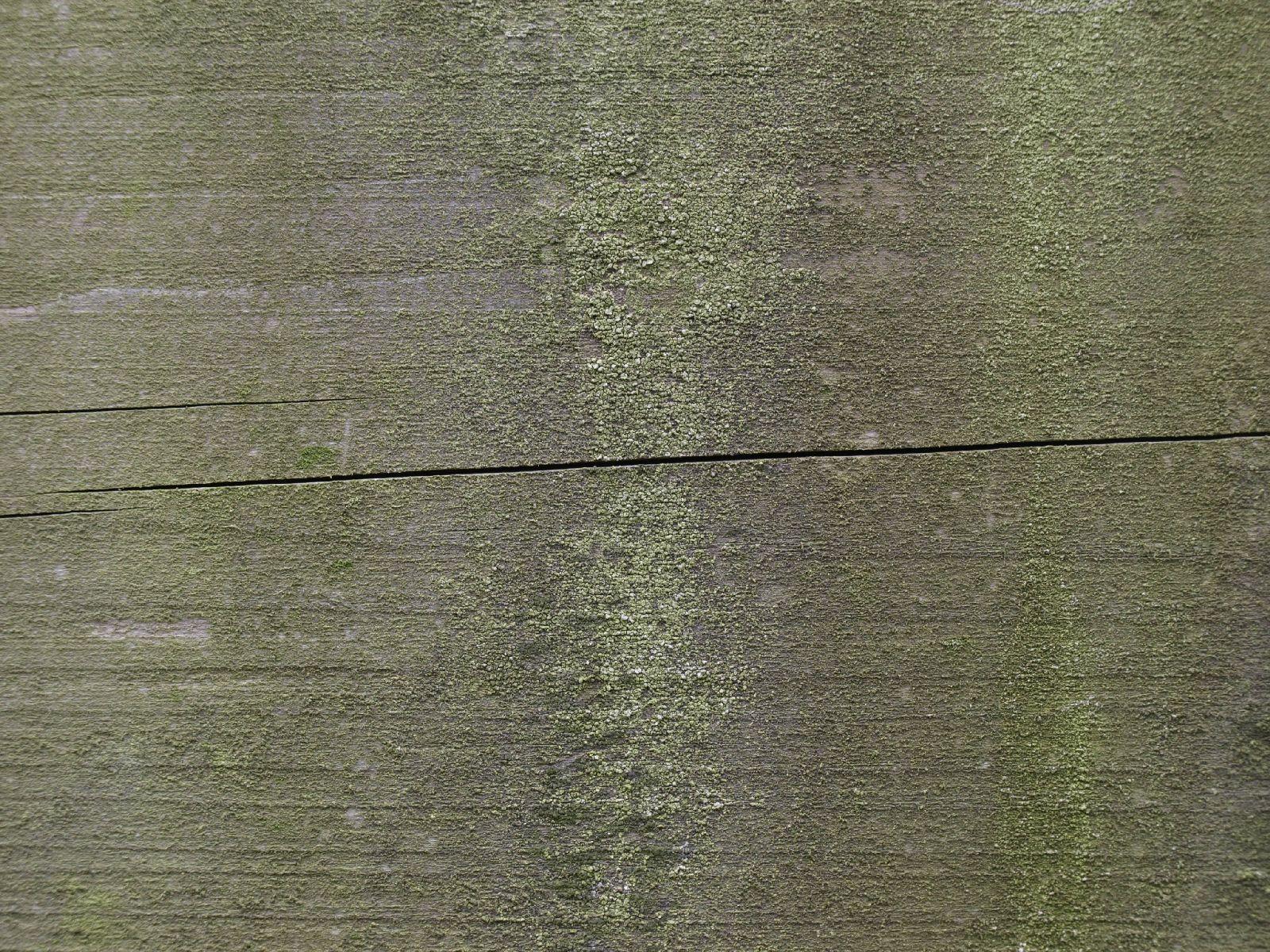 Wood_Texture_A_P2010343