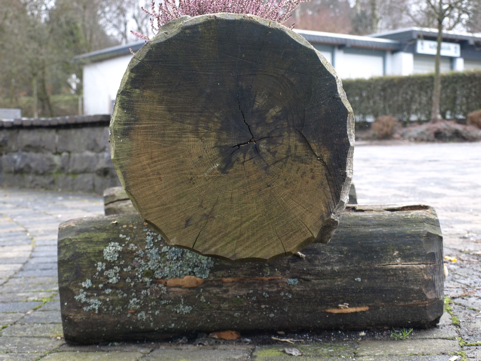 Wood_Texture_A_P2080565