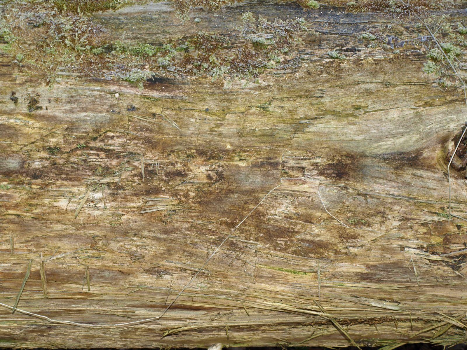 Wood_Texture_A_P4080192