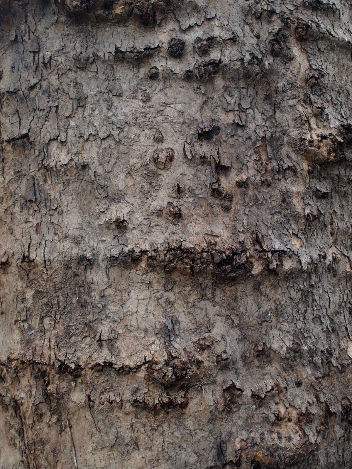 Wood_Texture_A_P4131168