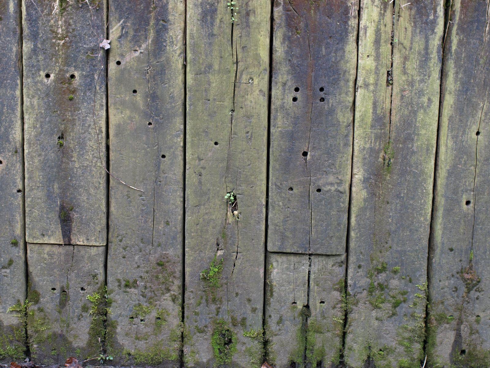 Wood_Texture_A_P4201431